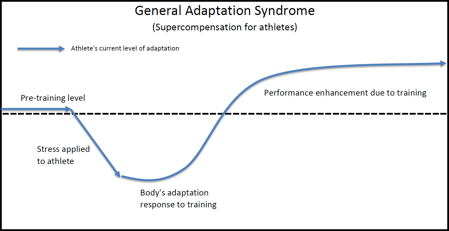 Adaptation_Response_with_Appropriate_Stress_in_Training_(Desired_Adaptation).png
